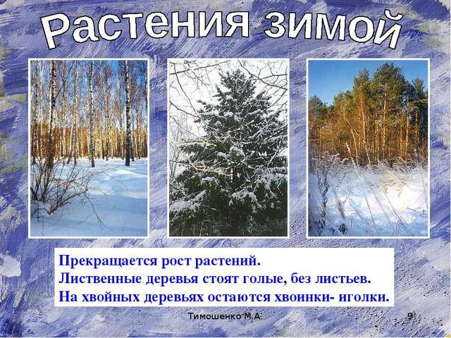 Тимошенко М.А. * Прекращается рост растений. Лиственные деревья стоят голые,...