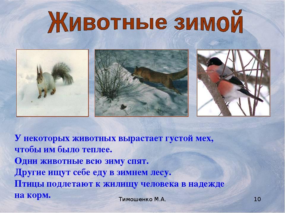 Тимошенко М.А. * У некоторых животных вырастает густой мех, чтобы им было теп...