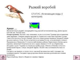 Рыжий воробей  Ареал обитания Исключительно редкий, находящийся под угрозой
