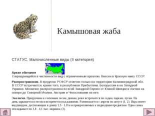 Камышовая жаба  СТАТУС. Малочисленные виды (II категория)  Ареал обитания С