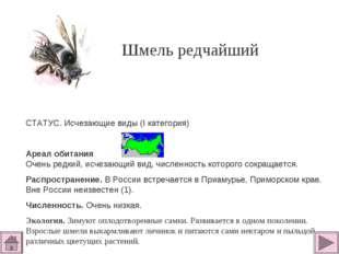 Шмель редчайший СТАТУС. Исчезающие виды (I категория)  Ареал обитания Очень
