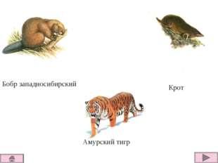 Бобр западносибирский Крот Амурский тигр