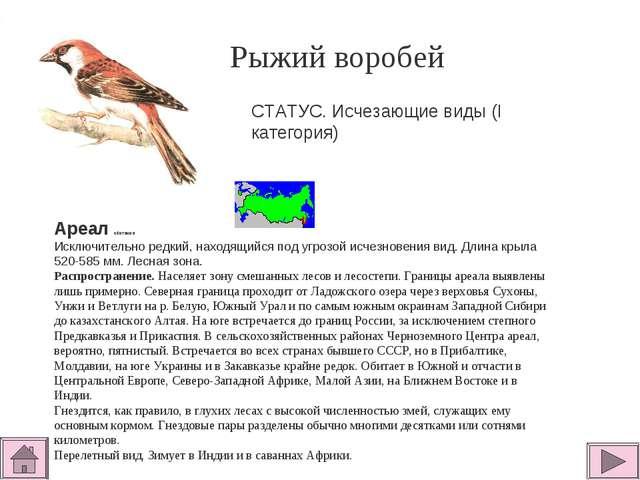 Рыжий воробей  Ареал обитания Исключительно редкий, находящийся под угрозой...