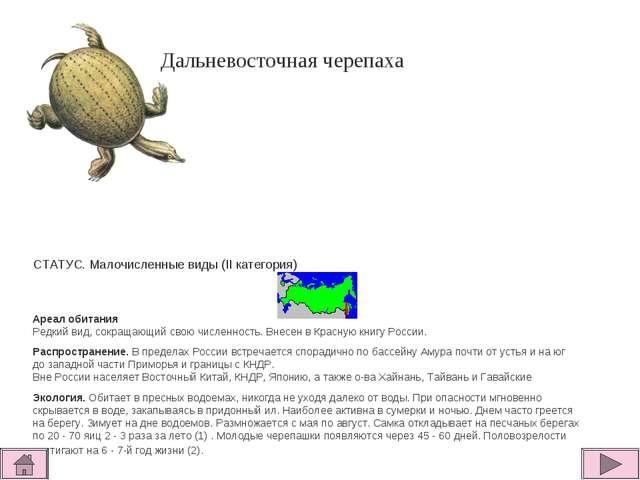 Дальневосточная черепаха       СТАТУС. Малочисленные виды (II категория...