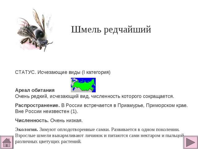 Шмель редчайший СТАТУС. Исчезающие виды (I категория)  Ареал обитания Очень...