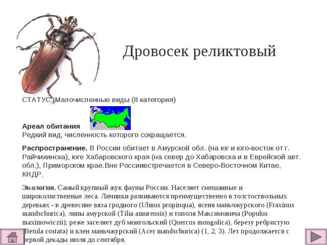 Дровосек реликтовый СТАТУС. Малочисленные виды (II категория)  Ареал обитани...