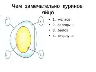 Чем замечательно куриное яйцо 1. желток 2. зародыш 3. белок 4. скорлупа. 1. 2