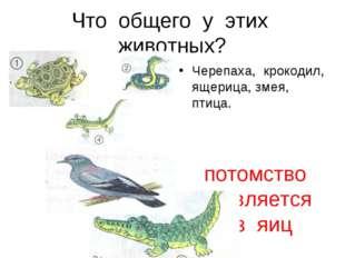 Что общего у этих животных? Черепаха, крокодил, ящерица, змея, птица. потомст