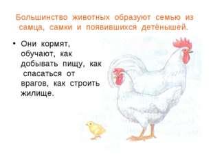 Большинство животных образуют семью из самца, самки и появившихся детёнышей.