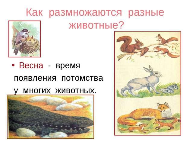 Как размножаются разные животные? Весна - время появления потомства у многих...