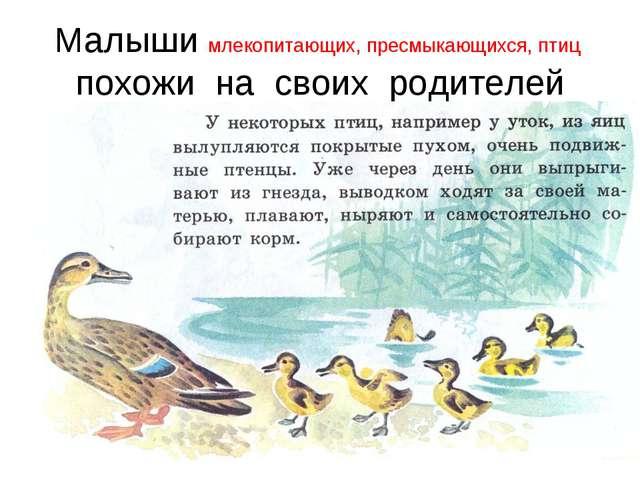 Малыши млекопитающих, пресмыкающихся, птиц похожи на своих родителей