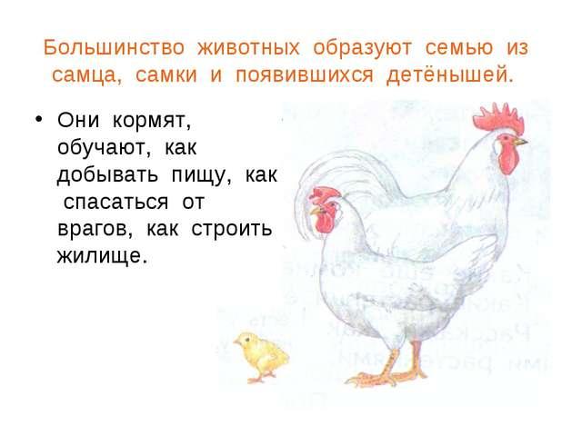 Большинство животных образуют семью из самца, самки и появившихся детёнышей....