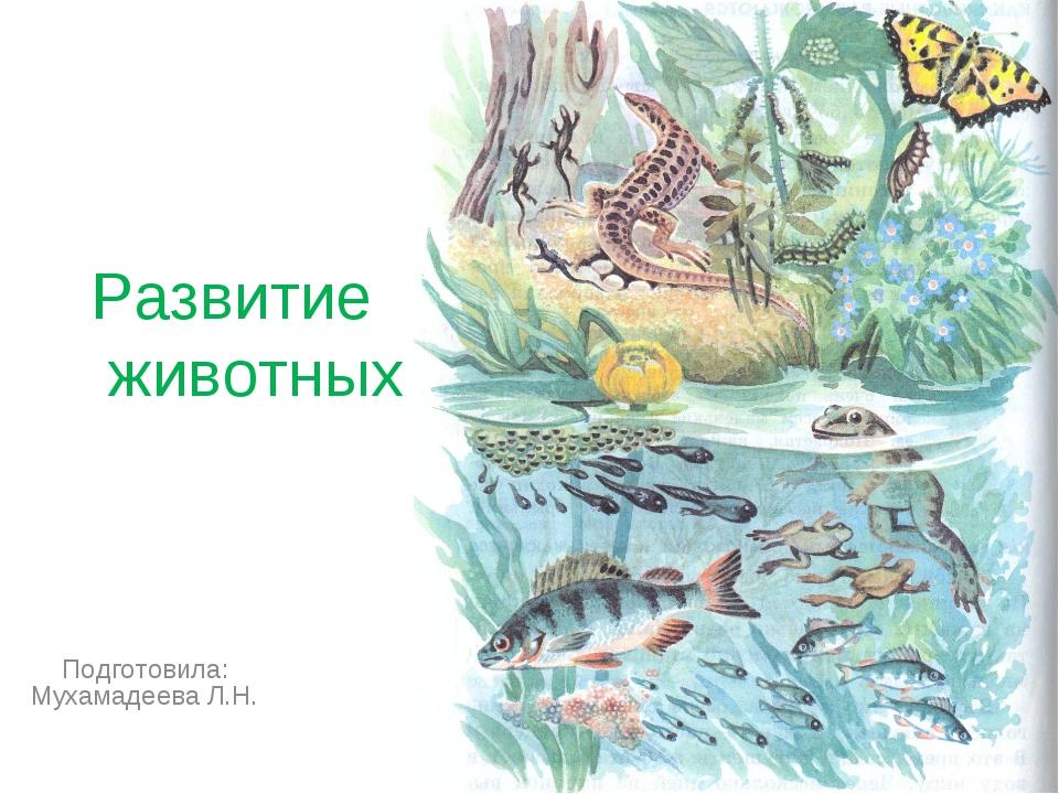 Развитие животных Подготовила: Мухамадеева Л.Н.