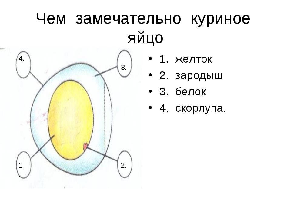 Чем замечательно куриное яйцо 1. желток 2. зародыш 3. белок 4. скорлупа. 1. 2...