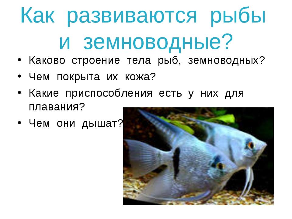 Как развиваются рыбы и земноводные? Каково строение тела рыб, земноводных? Че...