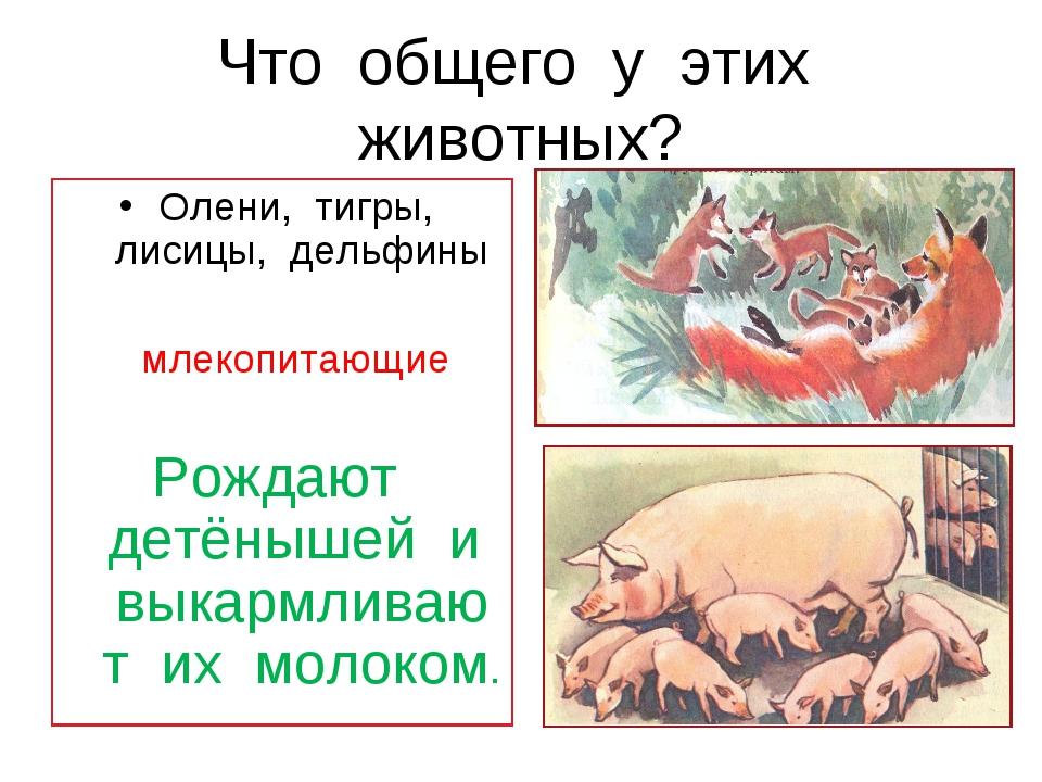 Что общего у этих животных? Олени, тигры, лисицы, дельфины млекопитающие Рожд...