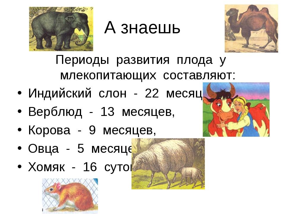 А знаешь Периоды развития плода у млекопитающих составляют: Индийский слон -...