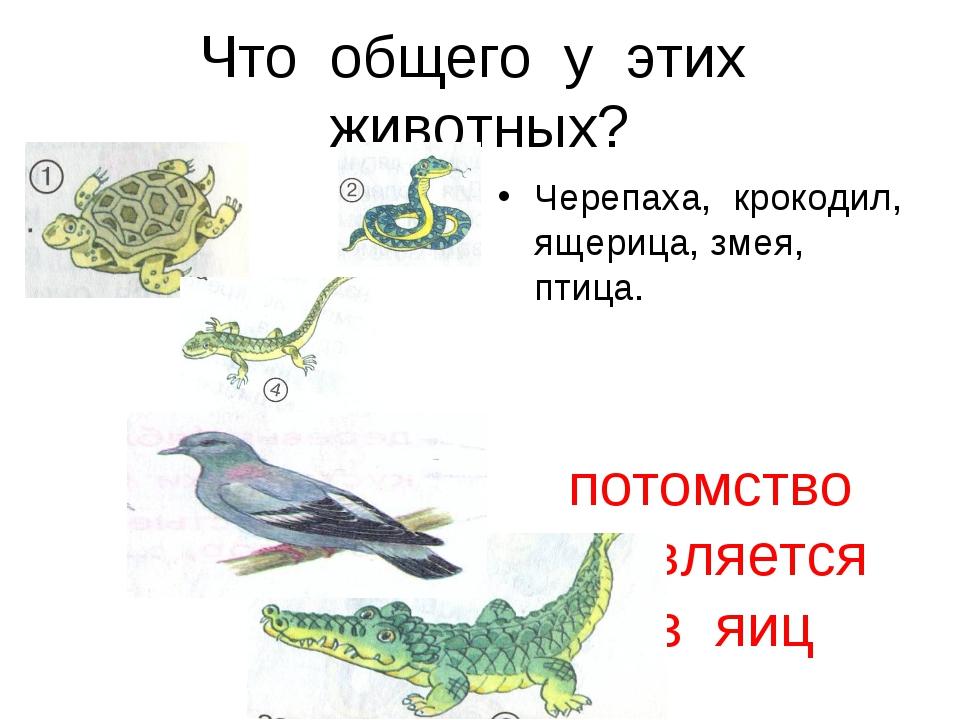 Что общего у этих животных? Черепаха, крокодил, ящерица, змея, птица. потомст...