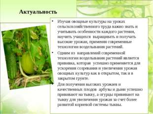 Актуальность Изучая овощные культуры на уроках сельскохозяйственного труда в
