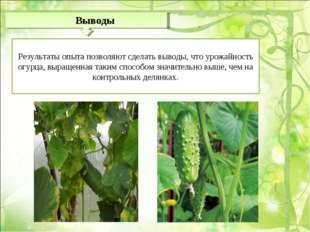 Результаты опыта позволяют сделать выводы, что урожайность огурца, выращенна