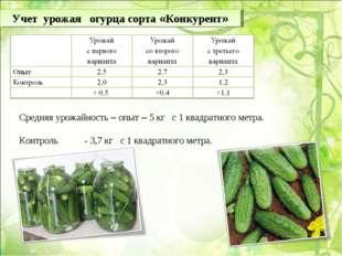 Учет урожая огурца сорта «Конкурент» Средняя урожайность – опыт – 5 кг с 1 кв