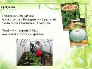 Посадочного материала: огурец сорта « Конкурент» - 6 растений, тыква сорта «