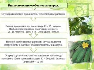 Биологические особенности огурца. Огурец однолетнее травянистое, теплолюбивое