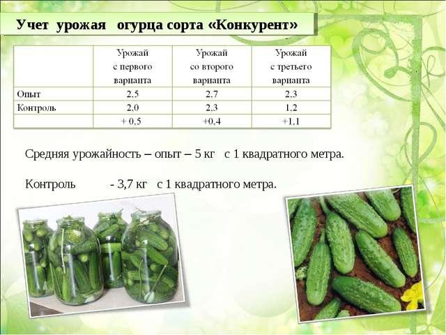 Учет урожая огурца сорта «Конкурент» Средняя урожайность – опыт – 5 кг с 1 кв...