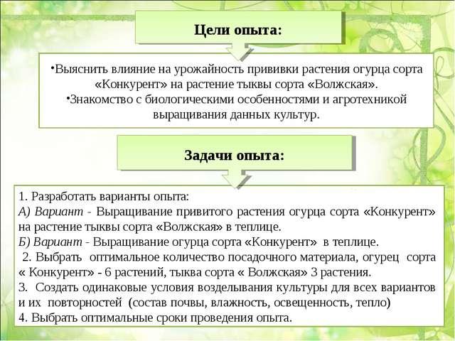 1. Разработать варианты опыта: А) Вариант - Выращивание привитого растения ог...