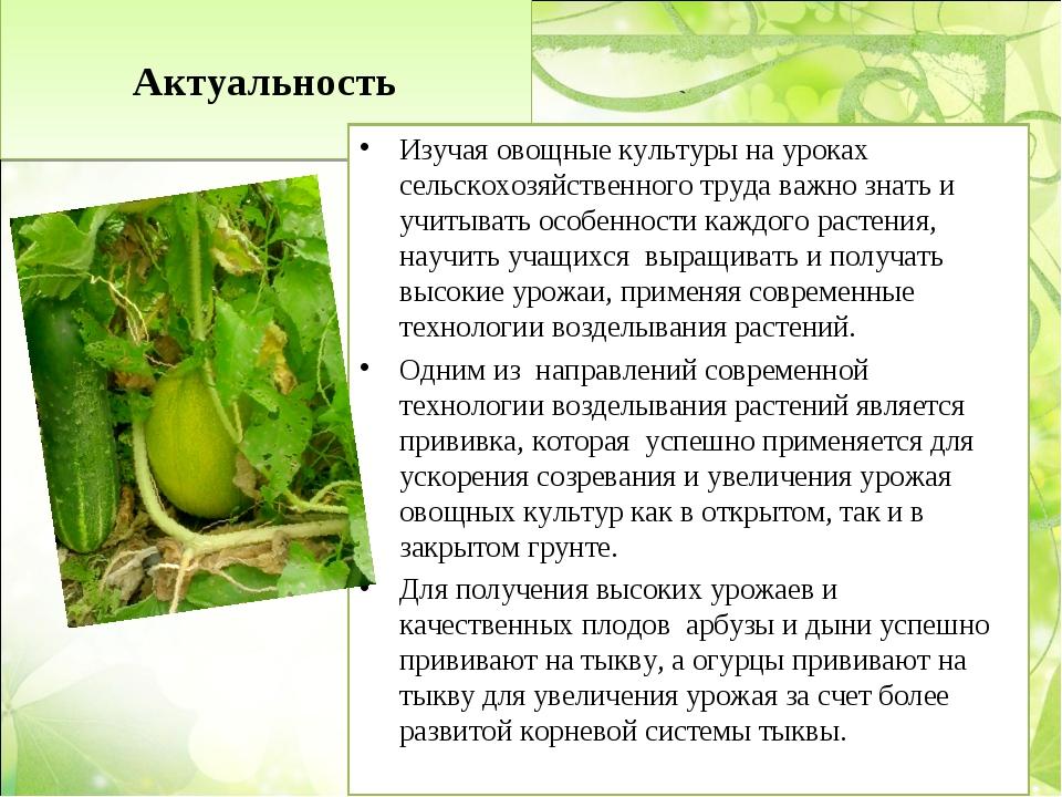 Актуальность Изучая овощные культуры на уроках сельскохозяйственного труда в...