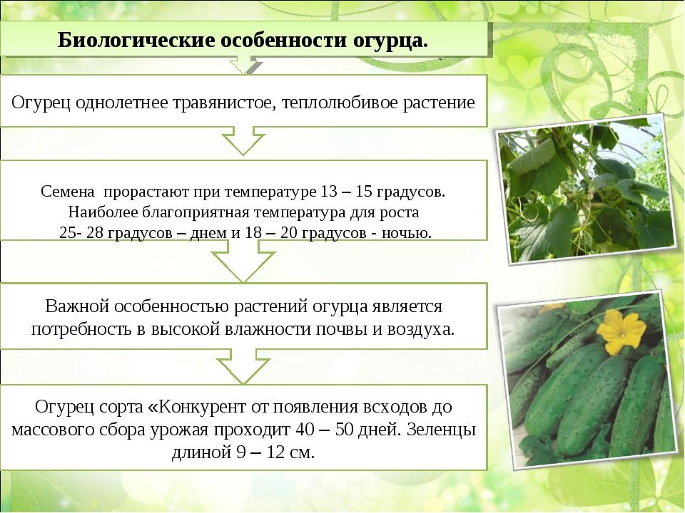 Биологические особенности огурца. Огурец однолетнее травянистое, теплолюбивое...