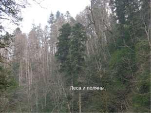 Леса и поляны,