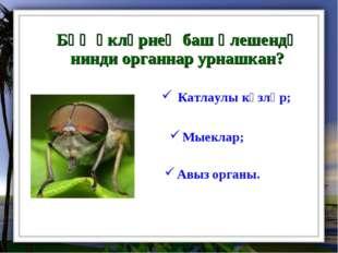 Бөҗәкләрнең баш өлешендә нинди органнар урнашкан? Мыеклар; Катлаулы күзләр;