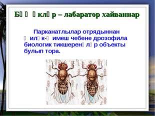 Бөҗәкләр – лабаратор хайваннар Парканатлылар отрядыннан җиләк-җимеш чебене