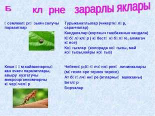 Үсемлекләргә зыян салучы паразитларТурыканатлылар (чикерткәләр, саранчалар)