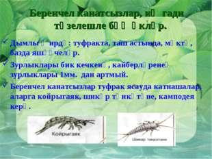Беренчел канатсызлар, иң гади төзелешле бөҗәкләр. Дымлы җирдә: туфракта, таш