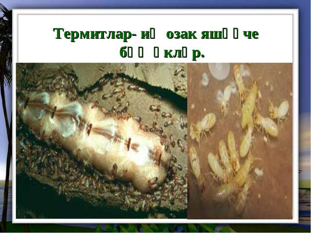 Термитлар- иң озак яшәүче бөҗәкләр.