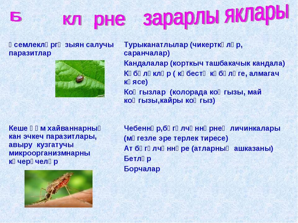 Үсемлекләргә зыян салучы паразитларТурыканатлылар (чикерткәләр, саранчалар)...