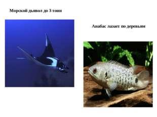 Морской дьявол до 3 тонн Анабас лазает по деревьям