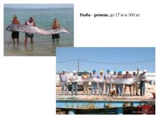 Рыба - ремень до 17 м и 300 кг