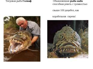 Тигровая рыба Голиаф Обыкновенная рыба-жаба способная реветь с громкостью свы