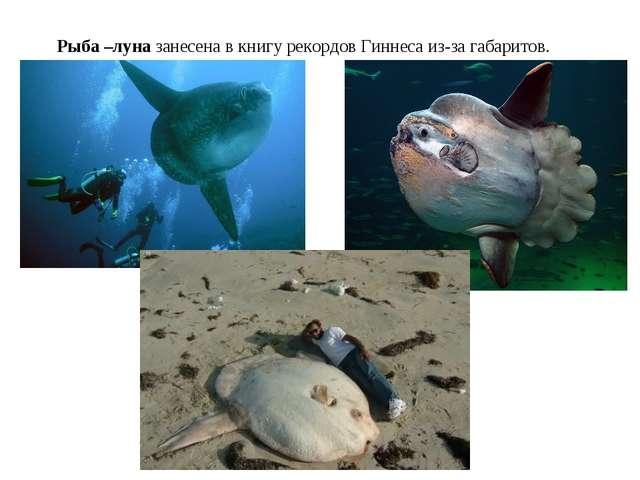 Рыба –луна занесена в книгу рекордов Гиннеса из-за габаритов.