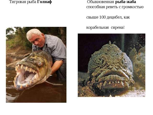 Тигровая рыба Голиаф Обыкновенная рыба-жаба способная реветь с громкостью свы...
