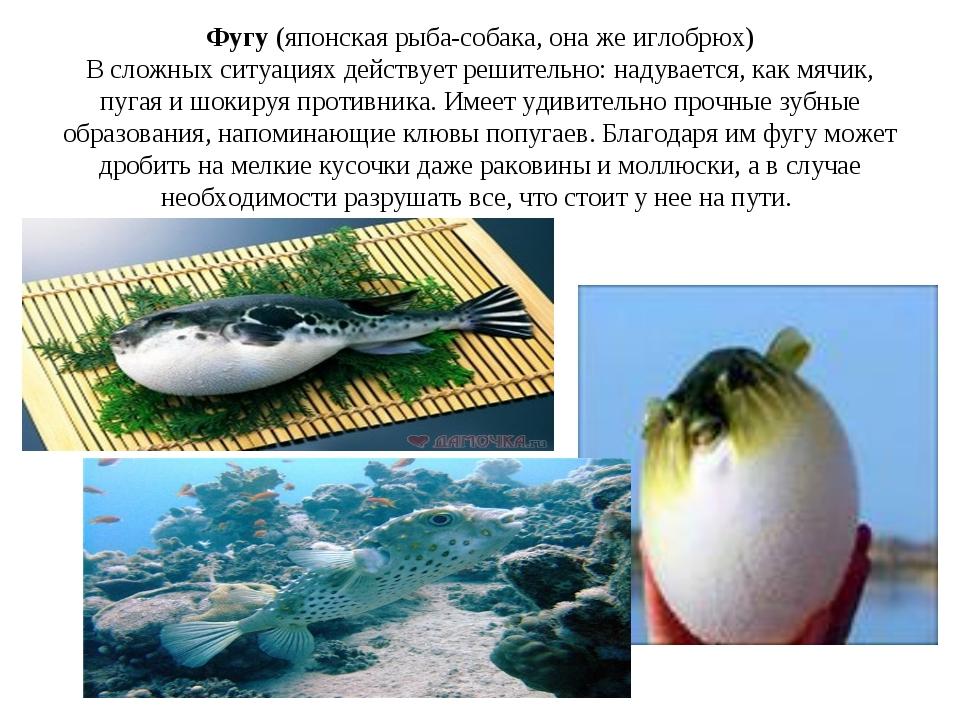 Фугу (японская рыба-собака, она же иглобрюх) В сложных ситуациях действует ре...