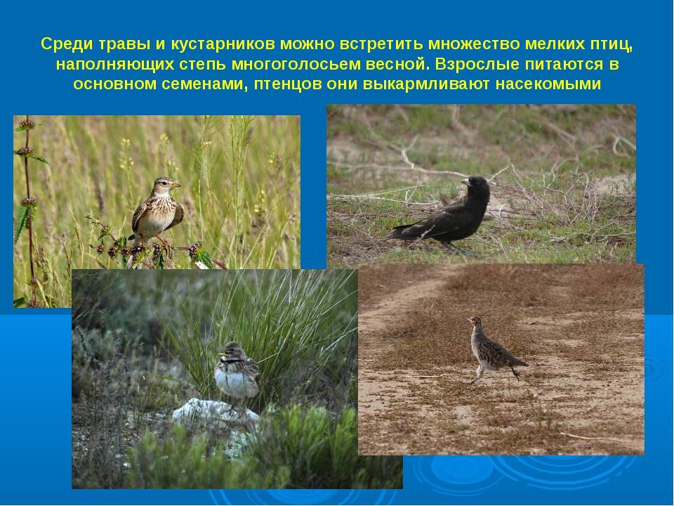 Среди травы и кустарников можно встретить множество мелких птиц, наполняющих...