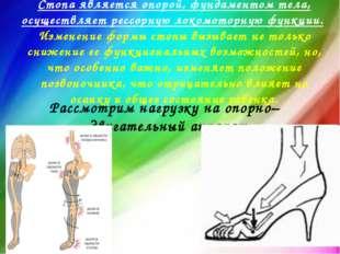 Стопа является опорой, фундаментом тела, осуществляет рессорную локомоторную