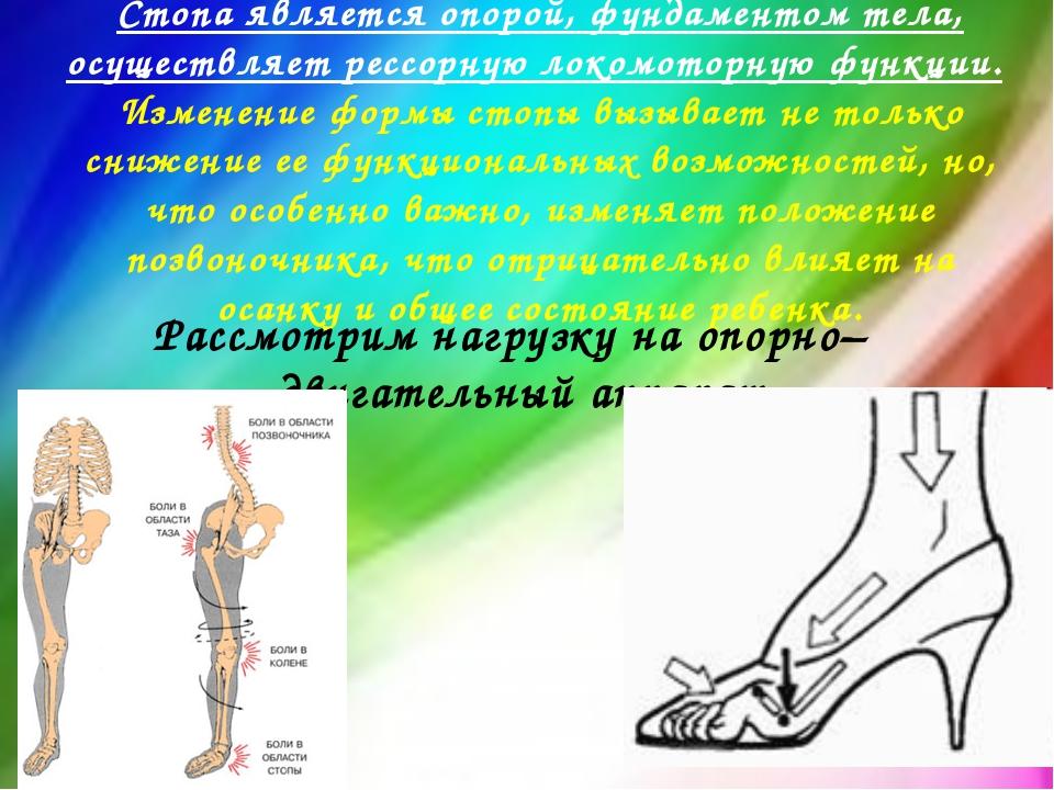 Стопа является опорой, фундаментом тела, осуществляет рессорную локомоторную...