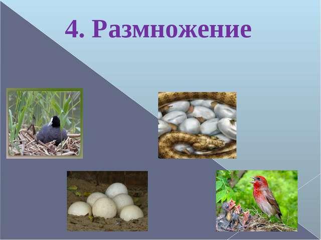 4. Размножение