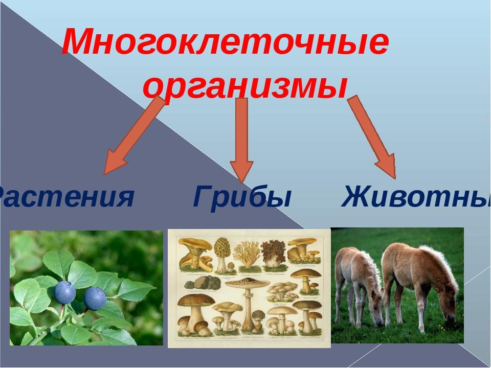 Многоклеточные организмы Растения Грибы Животные