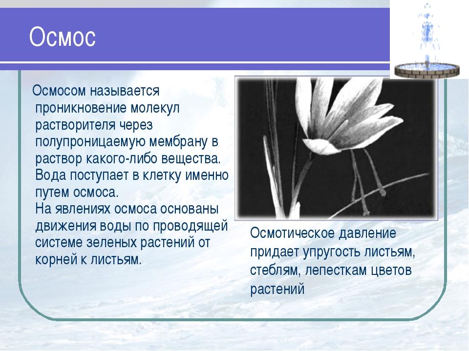 Осмос Осмосом называется проникновение молекул растворителя через полупроница...
